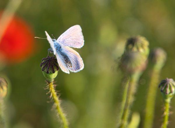flower-meadow-5175160_1920
