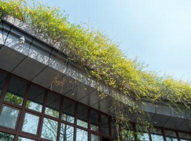 Plantenbakken Op Groen Dak Van Een Bedrijf