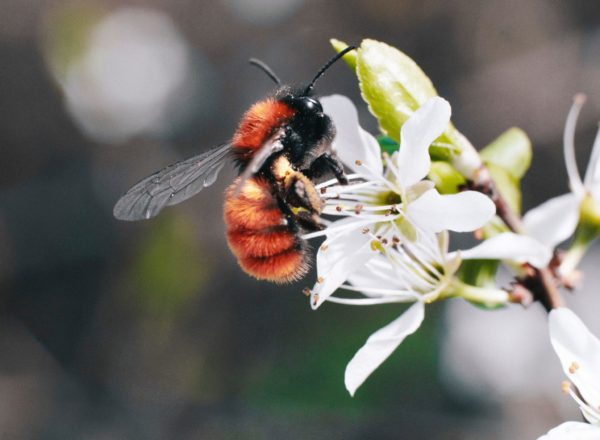 bestuiver vindt nectar in de natuur
