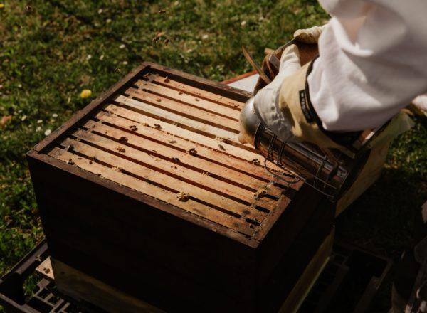 imker bij bijenkast met honingbijen