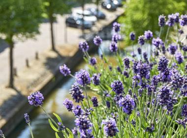 Bloembak Met Lavendel In Vensterbank Met Uitzicht Op Gracht
