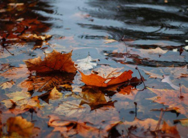 wateroverlast door extreme regenbui met herfstbladeren en water