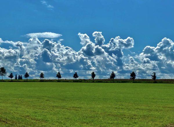 typisch nederlands landschap met weiland als monocultuur en wolken aan de horizon